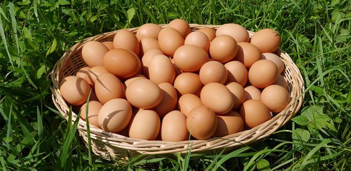こだわり卵 まんてん