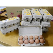 まんてん生卵 10個入り×12パック紙パック入り  産地直送でお届け