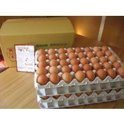 まんてん生卵 160個入【こだわりの配合飼料ならではの濃厚卵】 産地直送でお届け